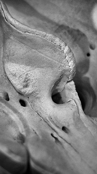Lunar Dusk (SKULL 02): Archival Anatomical Photo Print in Black and White