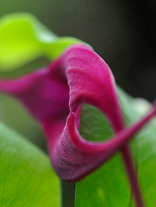 Botanical Photo Print: Bold Arcs in Magenta and Green