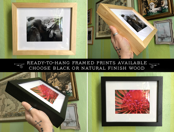ready-to-hang framed prints available now
