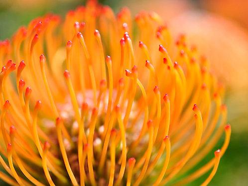 Botanical Photo Print: Bonfire in Orange and Red