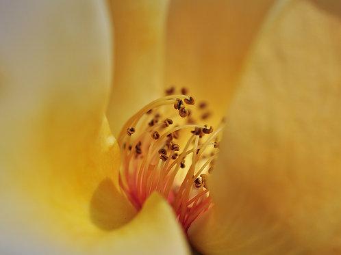 Botanical Photo Print: Canyon Mirage in Sherbet Yellow and Orange