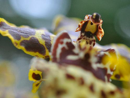 Botanical Photo Print: Banking Aeroplane in Yellow and Brown
