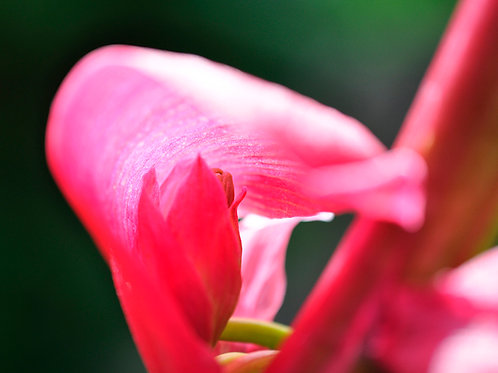 Botanical Photo Print: Hiding Place in Neon Pink
