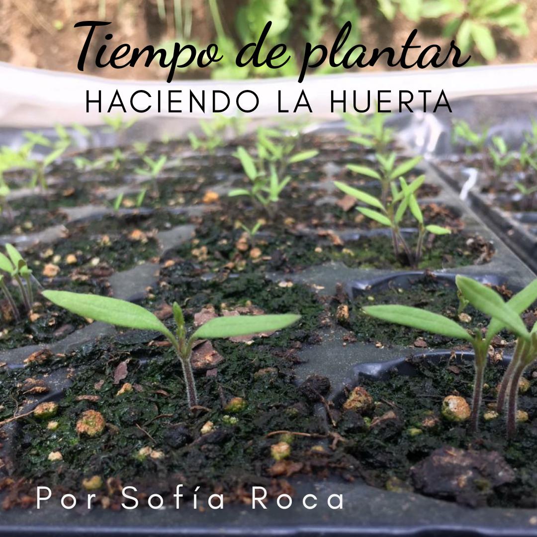 Tiempo de plantar
