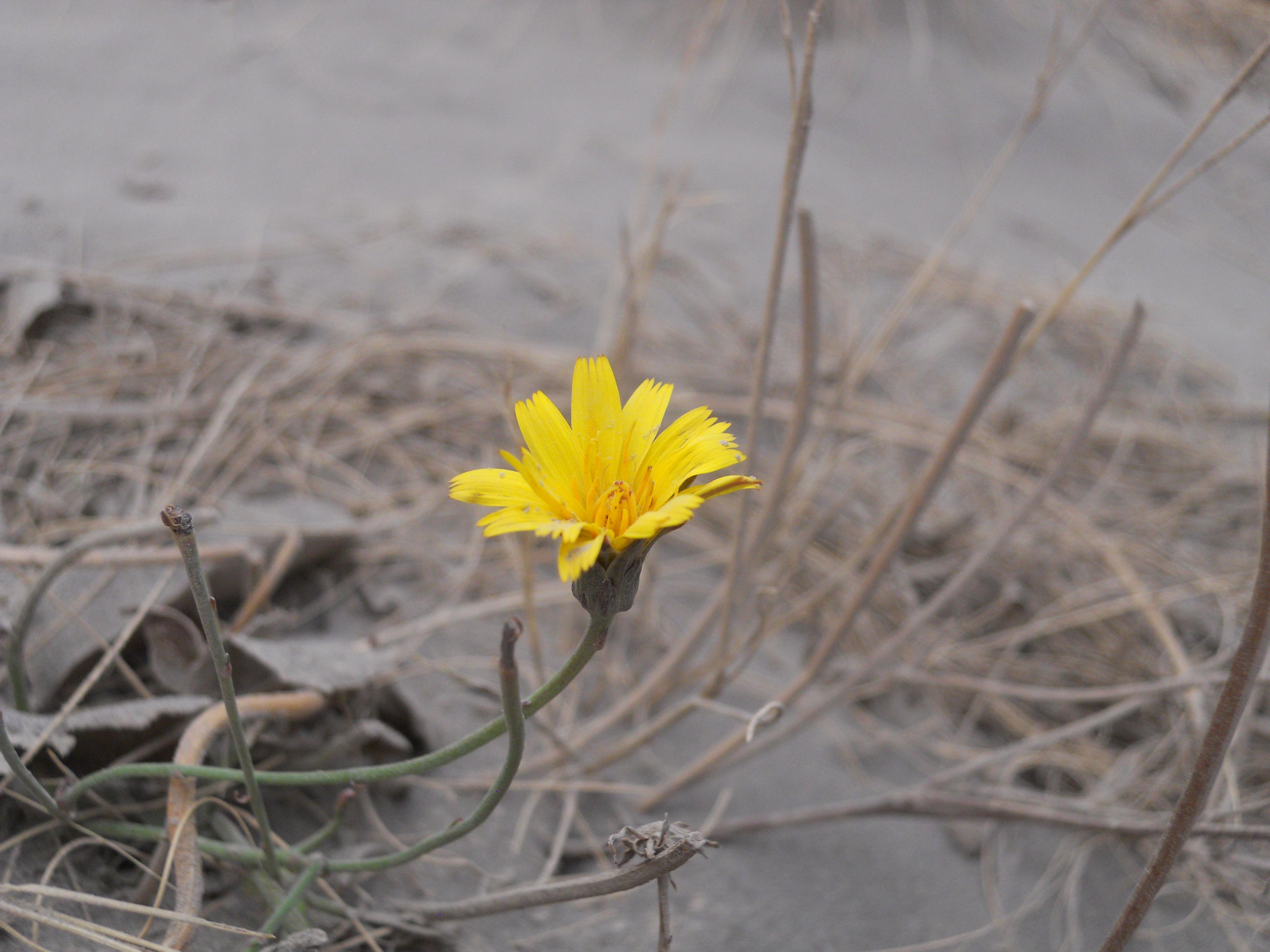Amarillo sobre fondo gris