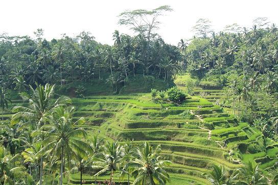 Ubud, paises exóticos del mundo, donde viajar