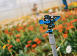 5 Reasons Why You Need an Irrigation Backflow Preventer