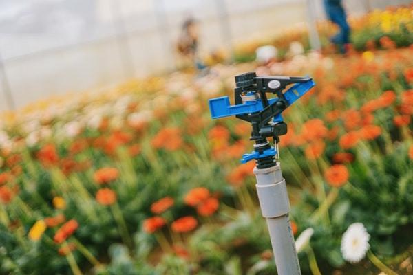 irrigation backflow preventer
