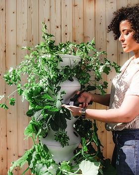 Lettuce Grow.jpg