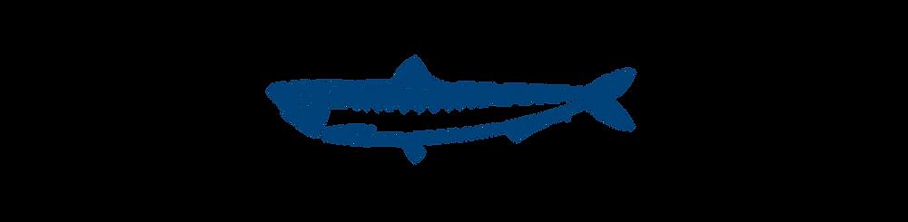Nordic fish, Salmon