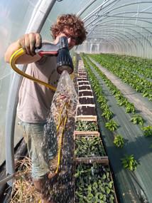 arrosage semis de courge