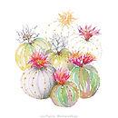 Cactus 3b - Lara Pujante.jpg