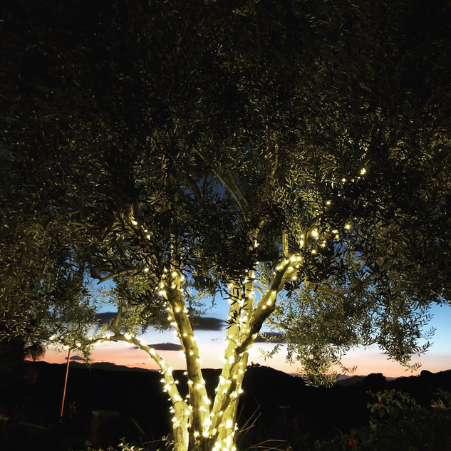 Glowing Olive Tree