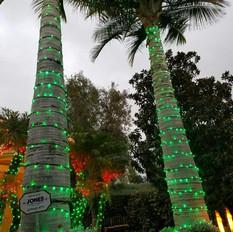 Green Palm Twin Trees