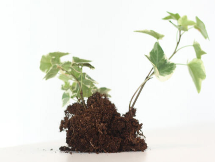What Does a Plant Have to Do with Personal Development?