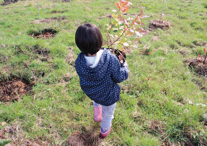 今年最後の農作業体験会が終了!-苗の植え付け&冬囲い&フルーツフォンデュの会―