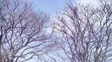 木はダンスを踊っている -木について思うこと-