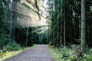 path with guiding light.jpg