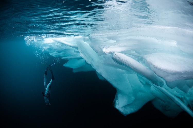 Lilly diving beside iceberg