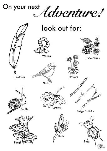Forest School colour in.jpg