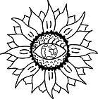 sunflower eye bw.jpg