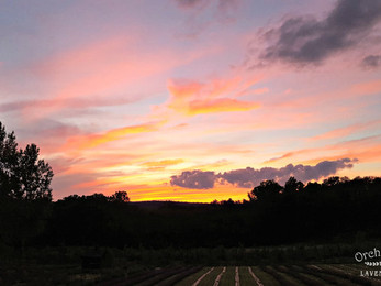 Sunset Party at the Lavender Farm