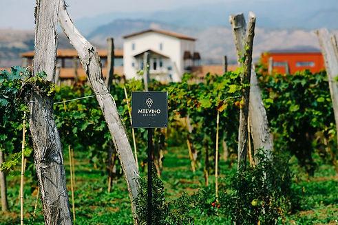 winery-mtevino-01.jpg