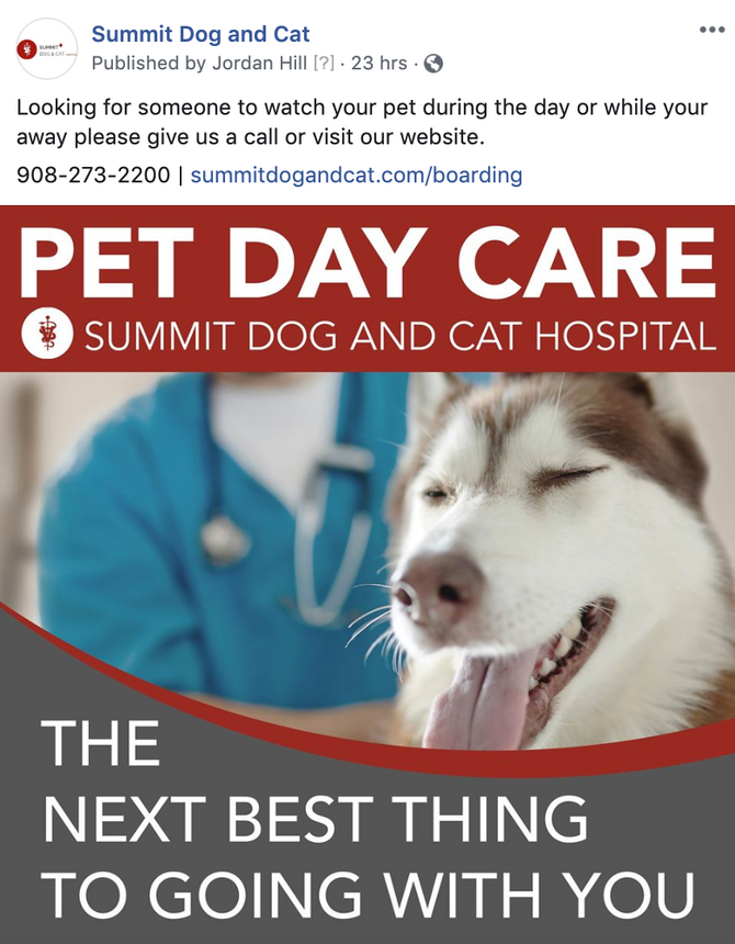 New Social Media Campaign for Summit Dog and Cat
