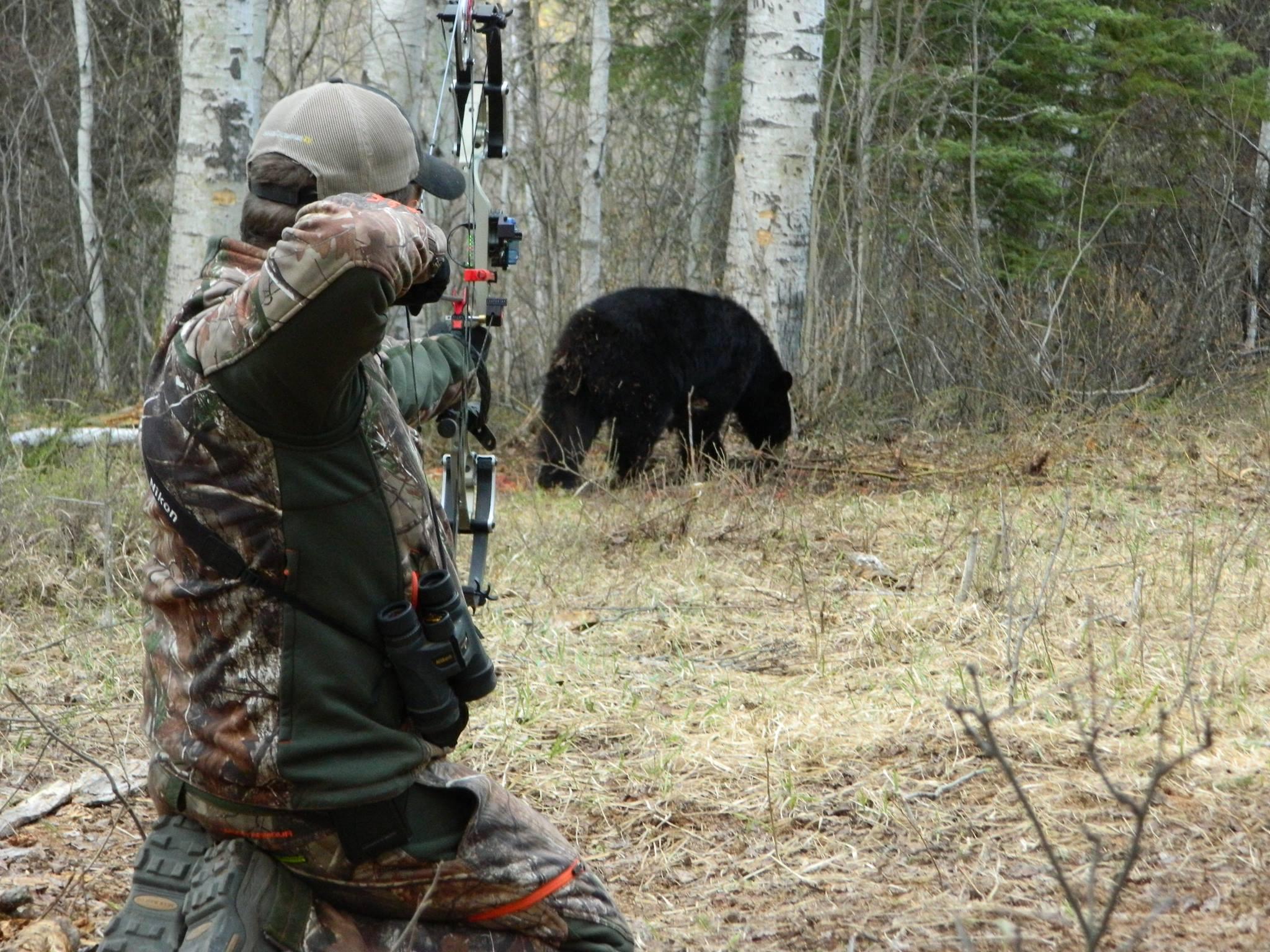 Dave Bear Stalk