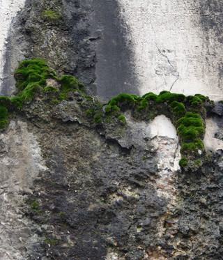 Moss on the Bridge