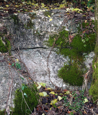 Moss, Rock, and Vines
