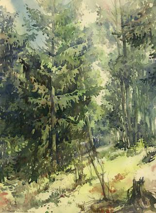 Puszcza Augustowska