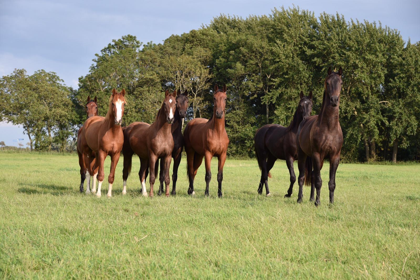 EESH Horses in Germany 03