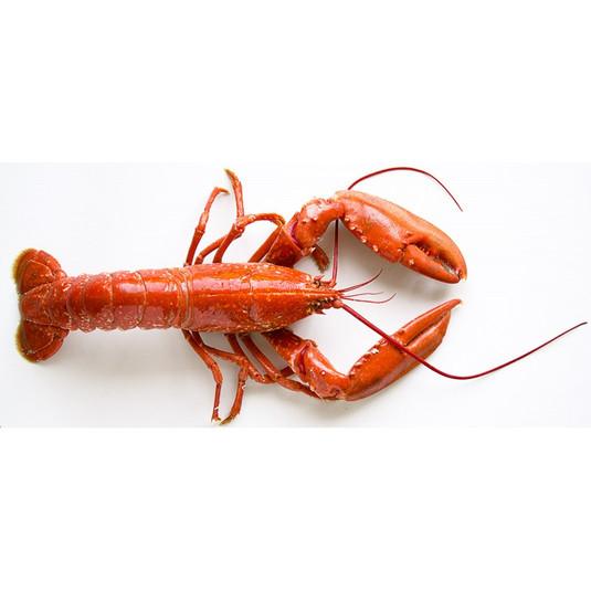 nos-crustaces-livres-chez-voussecteur-de