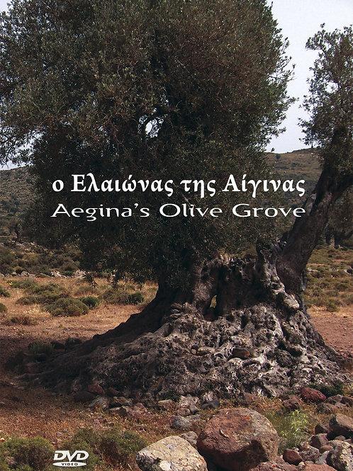 O Ελαιώνας της Αίγινας - Aegina's Olive Grove