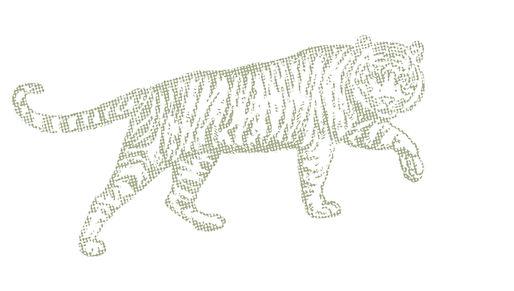 Tigre asiatique