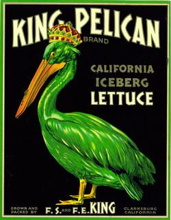 King Pelican California Iceberg Lettuce.