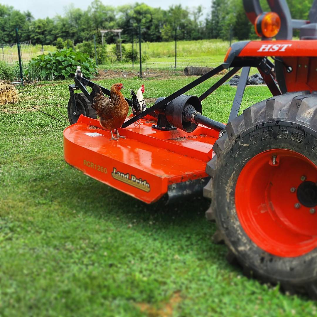 Chickens on the tractor