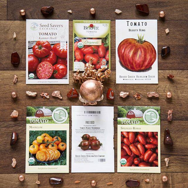 Solanaceae family: Tomato Seed