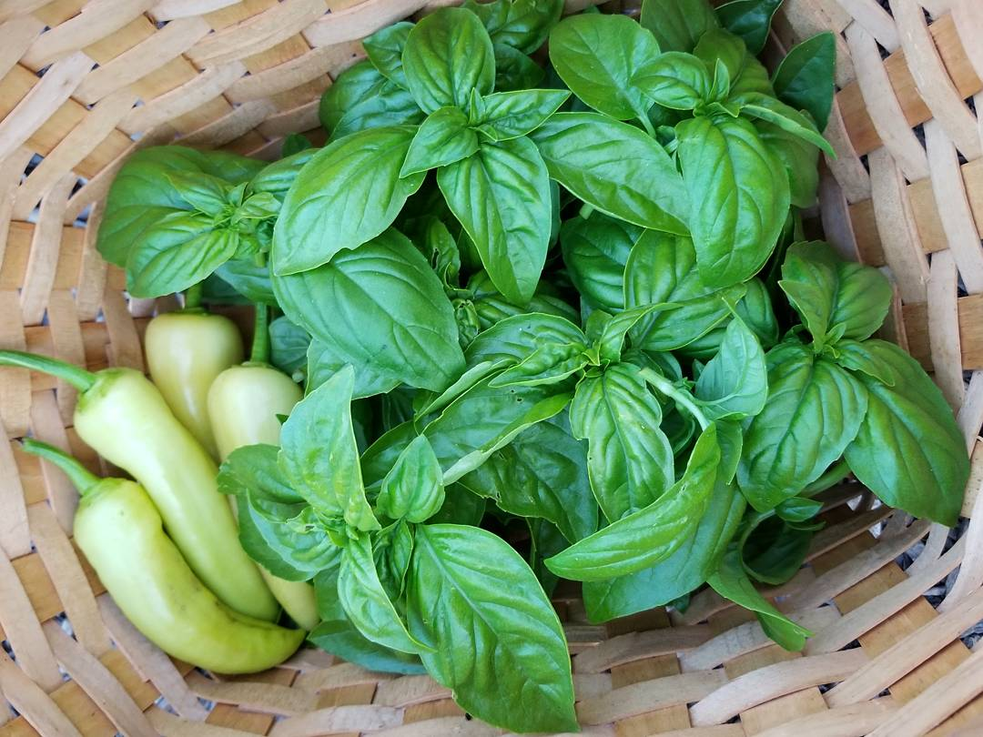 Peppers and Basil