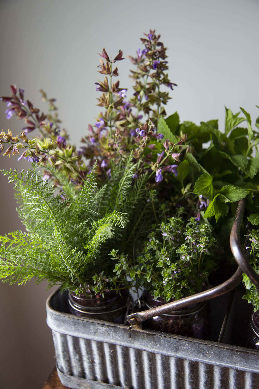 csa week1 herbs