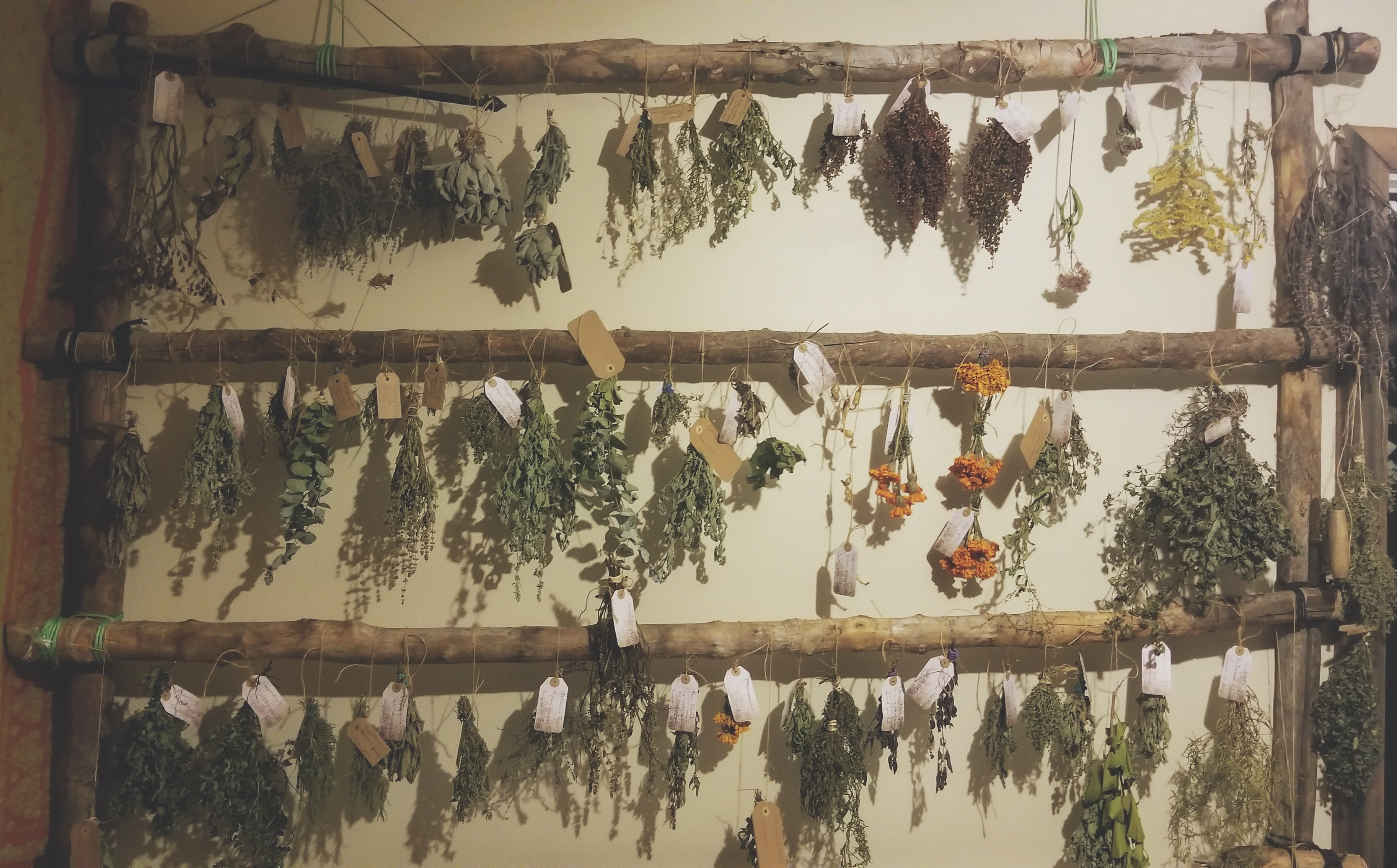 Herbs Drying in the Apothecary
