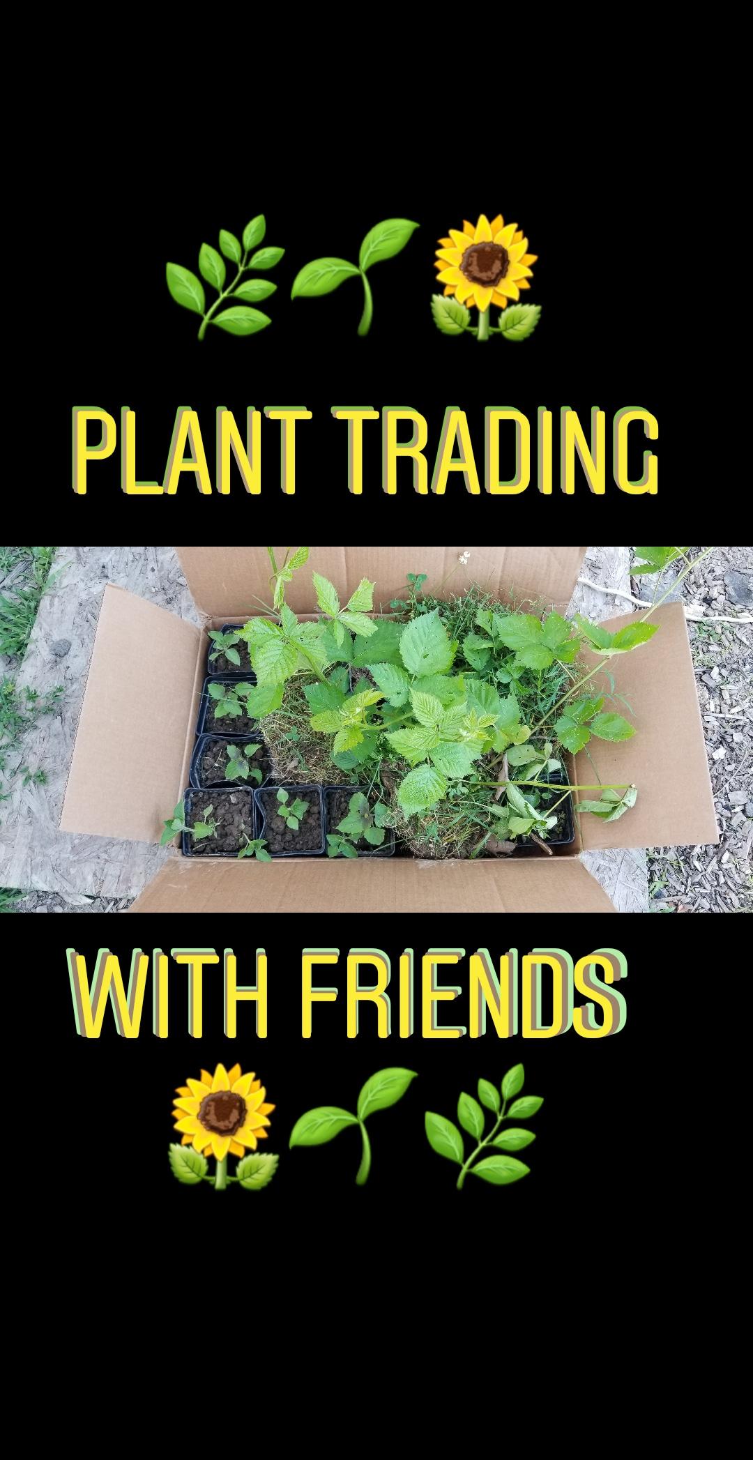 plant trading