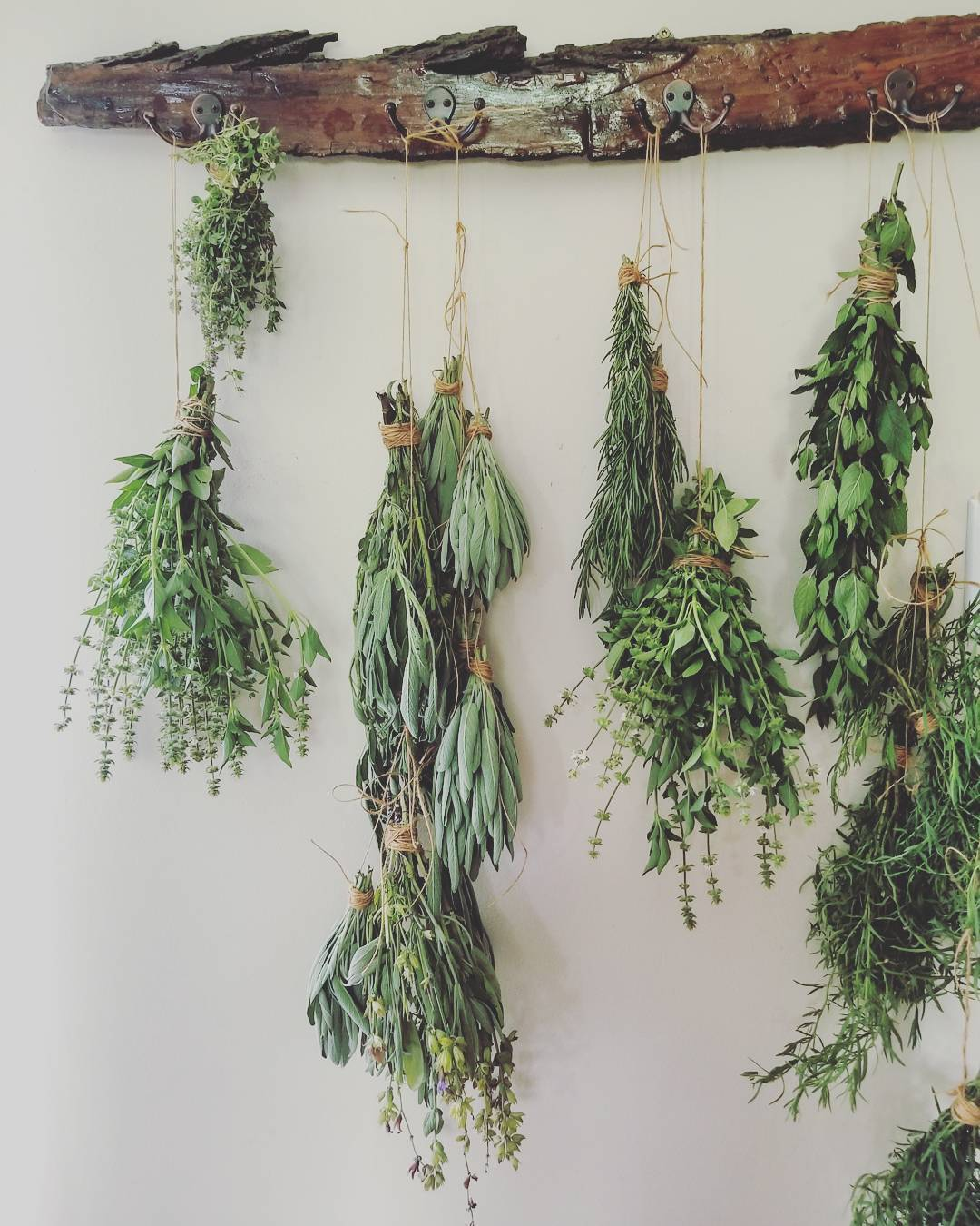 Hanging and drying herbs