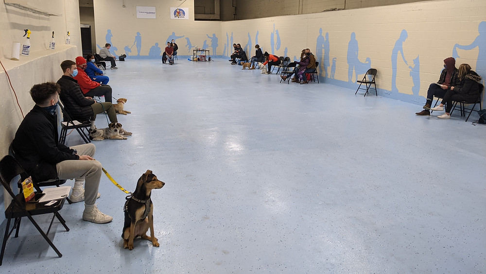 Dogs and their owner attending a dog obedience class