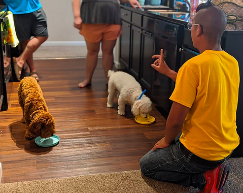 yello shirt dog trainer teaching owners how to feed their puppies properly