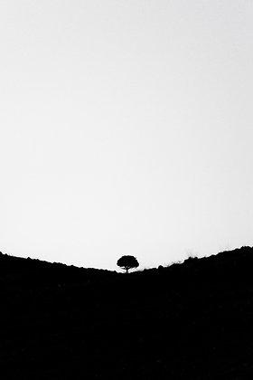 עץ סימטרי