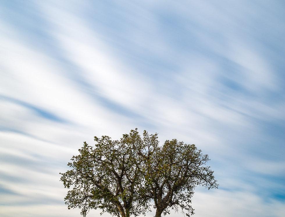 עץ מפוצל