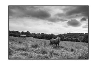 Le cheval Nantais.jpg