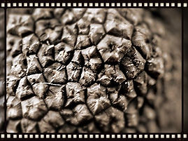 Gros plan d'une truffe